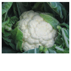 COLIFLOR FRONTINA 1000 S
