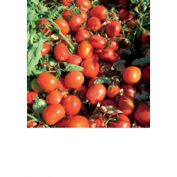 TOMATE JAG 8810 1.000 S.