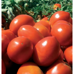 TOMATE AB 3  1.000 S.