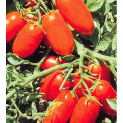TOMATE DOCET 1.000S